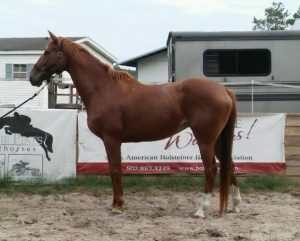 Party Girlxx TB mare